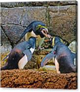 Penguin Talk Canvas Print
