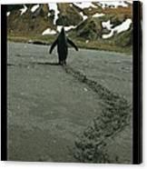 Penguin Travel Poster Canvas Print