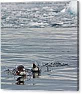 Penguins In The Water Canvas Print
