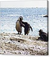 Penguins Kissing At Boulders Beach Cape Town Canvas Print