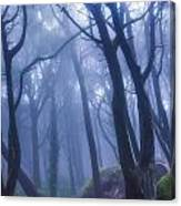 Peninha Magical Forrest In Sintra Portugal Canvas Print