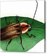 Pennsylvania Firefly Canvas Print