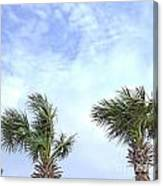 Pensacola Palms Canvas Print