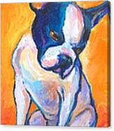Pensive Boston Terrier Dog  Canvas Print