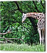 Pensive Giraffe Canvas Print