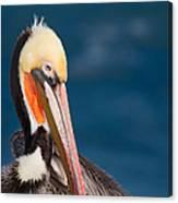 Pensive Pelican Canvas Print