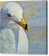Pensive Seagull Canvas Print