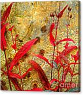 Penstemon Abstract 4 Canvas Print