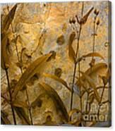 Penstemon Abstract 6 Canvas Print