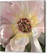 Peonie In Soft Pink Canvas Print