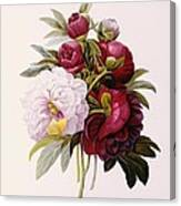 Peonies Engraved By Prevost Canvas Print