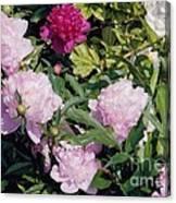 Peonies In Pinks Canvas Print