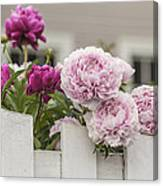Peonies On A Picket Canvas Print