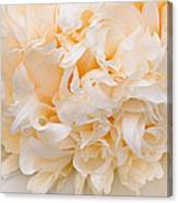 Peony Close-up In Peach Canvas Print