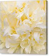 Peony Close-up In Yellow Canvas Print