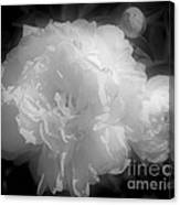 Peony Flower Phases Black And White Contrast Canvas Print