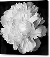 Peony In Bw Canvas Print