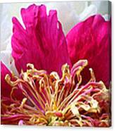 Peony Painterly Canvas Print