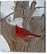 Perched Cardinal Canvas Print