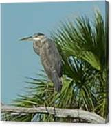 Perched Heron Canvas Print