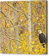 Perched In The Colors Of Autumn Canvas Print