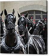 Percheron Horse Team 2008 Canvas Print