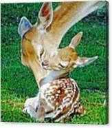 Pere David Deer And Fawn Canvas Print