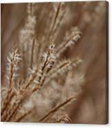 Perennial Grass Canvas Print