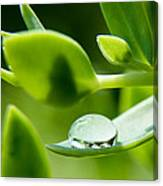 Perfect Raindrop Canvas Print