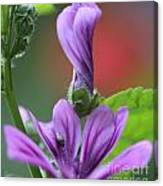 Perfect Rolled Canvas Print