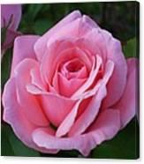 Perfect Rose Canvas Print