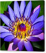 Perfect Water Lily Canvas Print