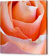 Perfection In A Peach Rose Canvas Print