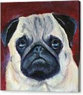 Perfectly Pug Canvas Print