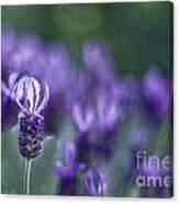 Perfume Of Summer Canvas Print
