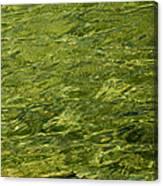 Peridot Canvas Print