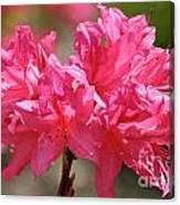 Periscope Pink Canvas Print
