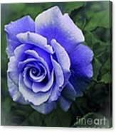 Periwinkle Rose Canvas Print