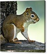 Perky Squirrel Canvas Print