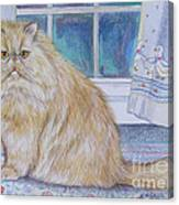 Persian Cat In Kitchen Canvas Print