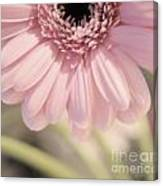 Personally Pink Canvas Print