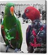 Pet Parrots In A Cafe Canvas Print