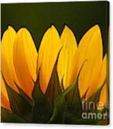 Petales De Soleil - A01 Canvas Print