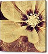 Petaline - T37d03a3 Canvas Print