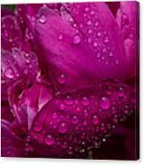 Petals And Drops I Canvas Print