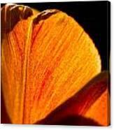 Petals And Sun Canvas Print