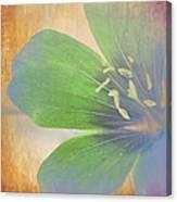Petals Of Color Canvas Print