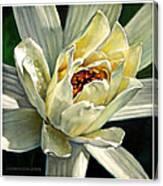 Petals Of Ivory Canvas Print