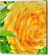 Petals Of Sunshine Canvas Print