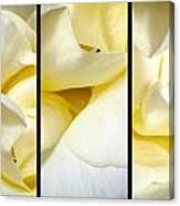 Petals Triptych Canvas Print